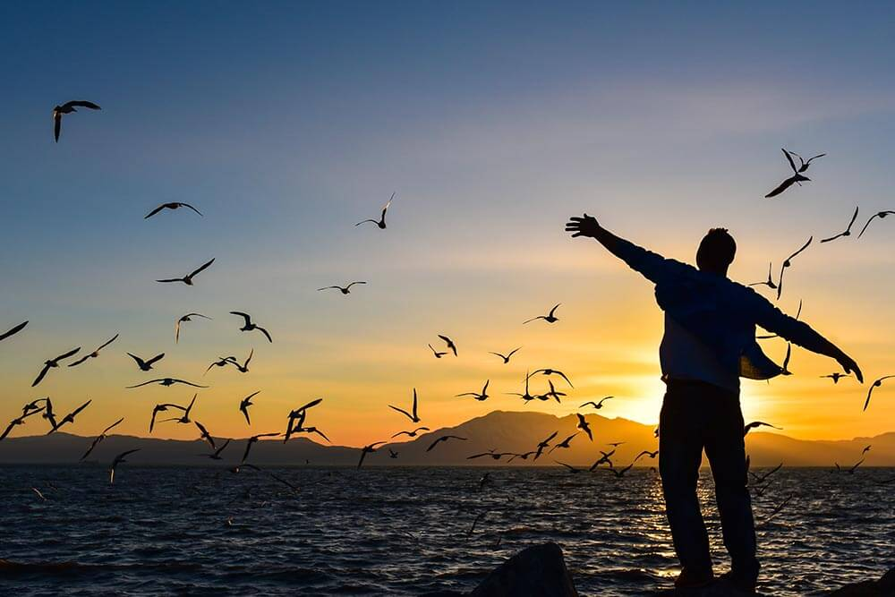 lighthousetreatment-10-good-reasons-to-get-clean-and-sober-article-photo-freedom-peace-and-seagulls-395018035