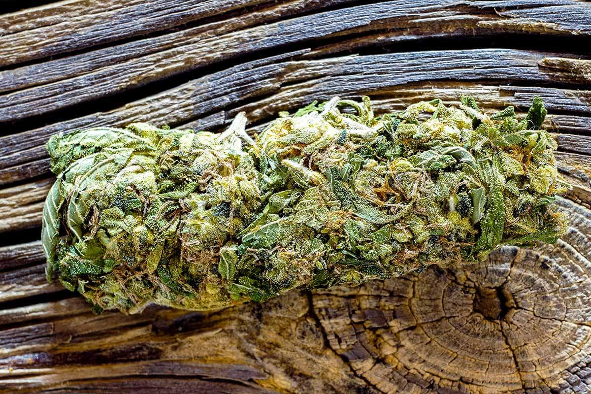 lighthousetreatment-what-is-cbd-and-can-i-use-it-for-sobriety-article-photo-macro-detail-of-single-cannabis-bud-mangolope-marijuana-strain-over-wooden-dark-background-1033564417